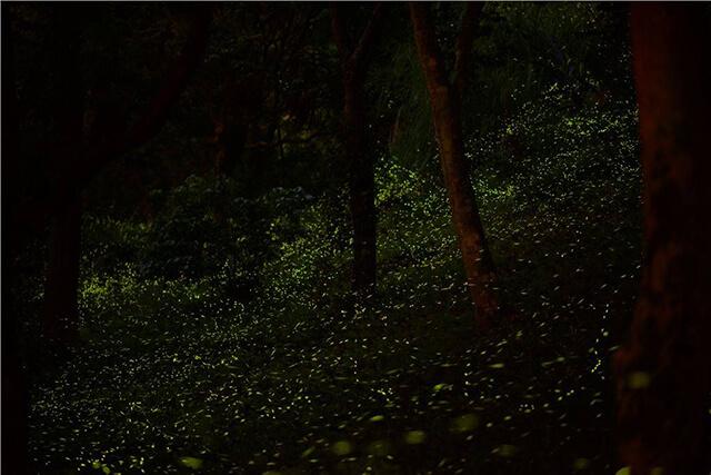 圖片來源:東勢林場遊樂區粉絲頁