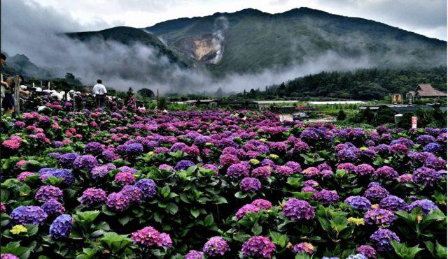 Grand_Garden