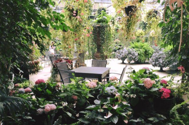 Hydrangea _birds_garden