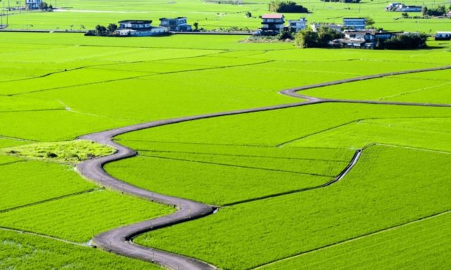 Sanqi_Village_Rice_Field_Path