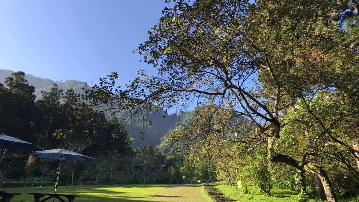 抗高溫大作戰!台灣中部避暑勝地推薦:福壽山、最美森林小學…等你玩