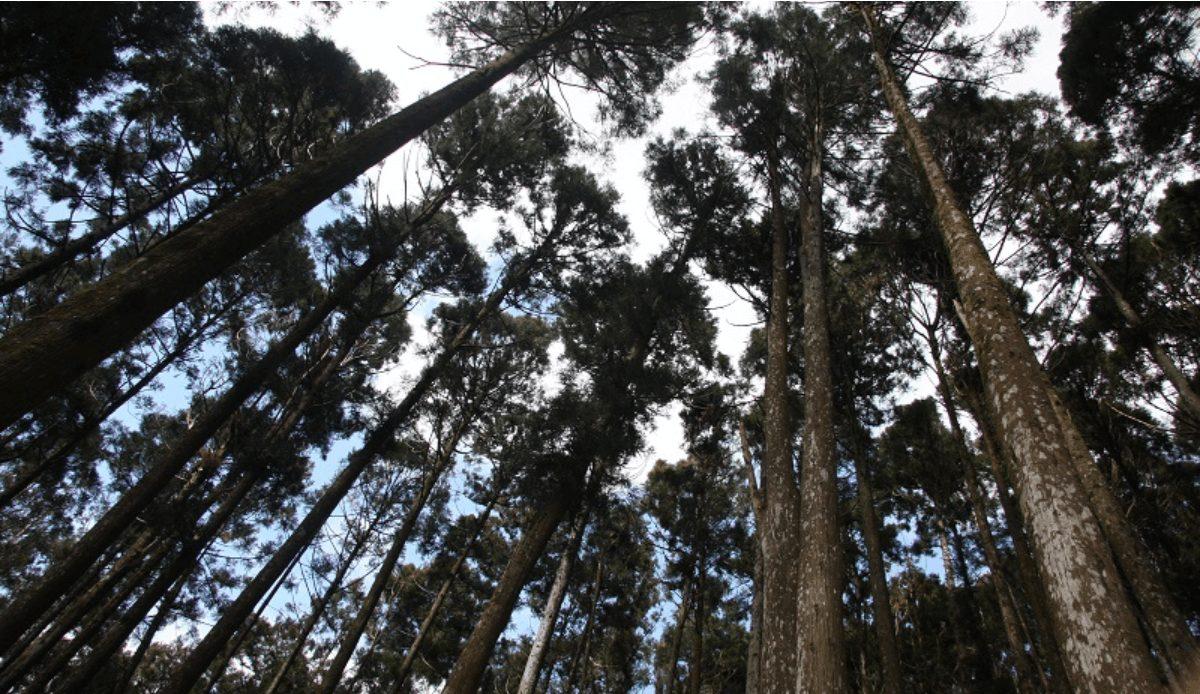 南台灣避暑勝地藤枝森林國家遊樂區