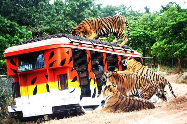 菲律賓克拉克景點 蘇比克野生動物園