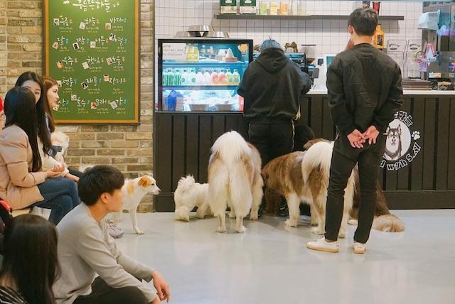 Cloud Pets Café