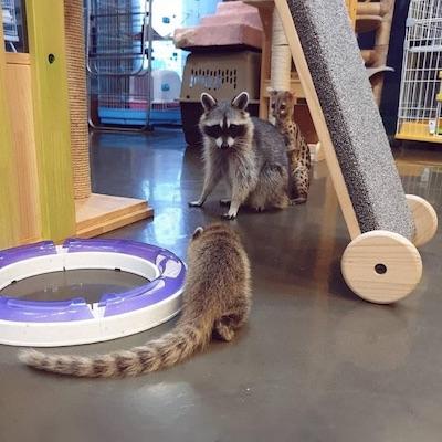 Meerkat Friends