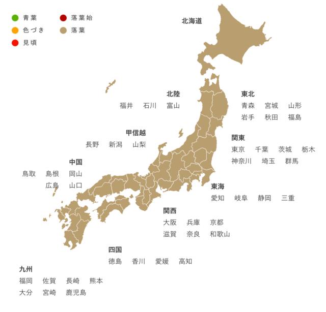 Japan_Maple_Leaf_Information_time
