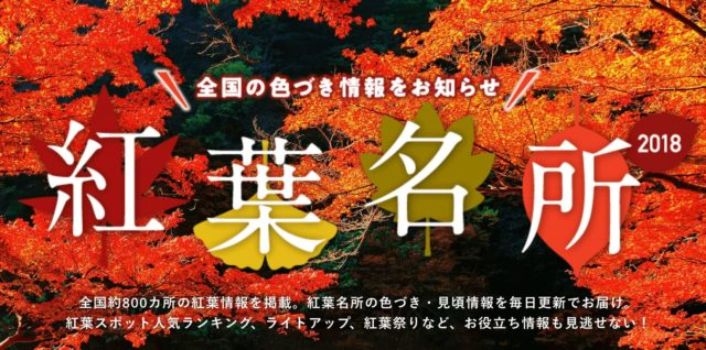 Japan_Maple_Leaf_Information_web