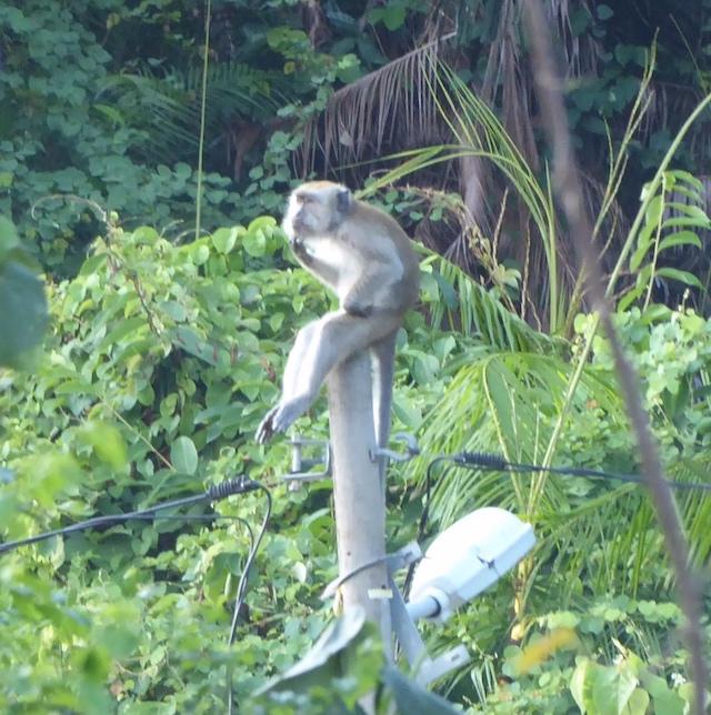 猴子灣Monkey Bay