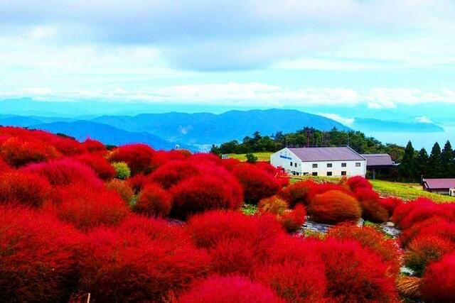 雙十連假日本行 秋紅琵琶湖