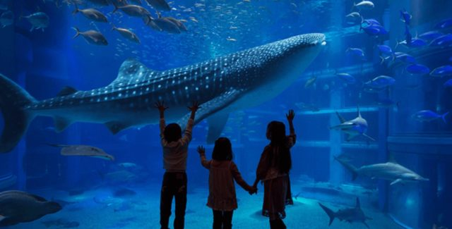 osaka_aquarium_kaiyukan_info