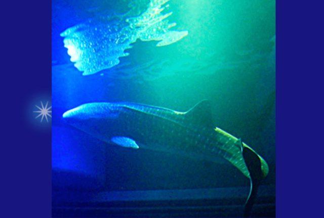 osaka_aquarium_kaiyukan_night