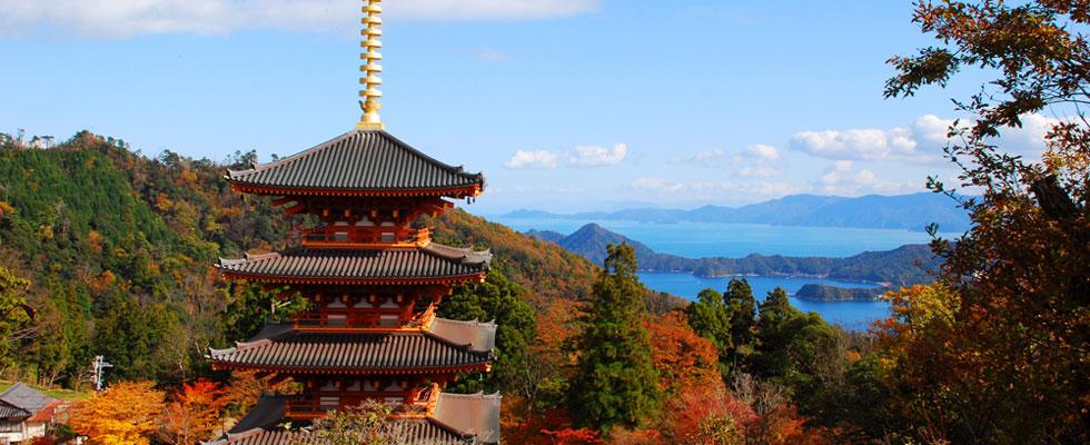 日本旅遊 | 京阪近郊 天橋立一日遊景點推薦,觀光船、餵海鷗超好玩