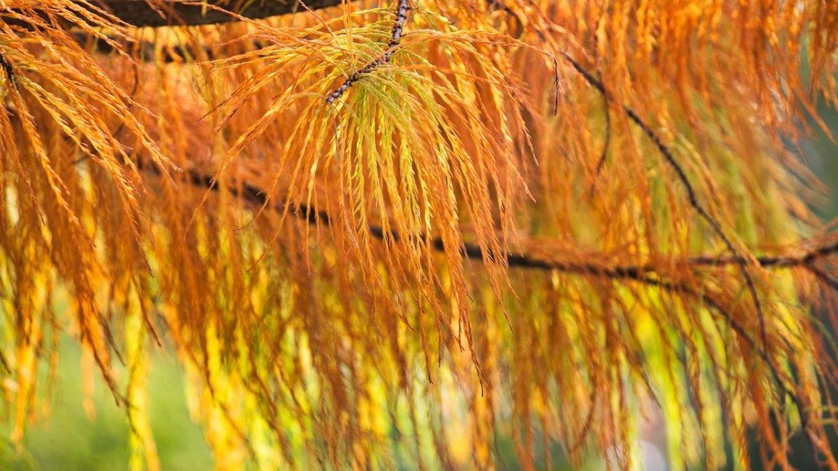 秋冬限定好去處!全台落羽松秘境推薦10選,怎麼拍怎麼美