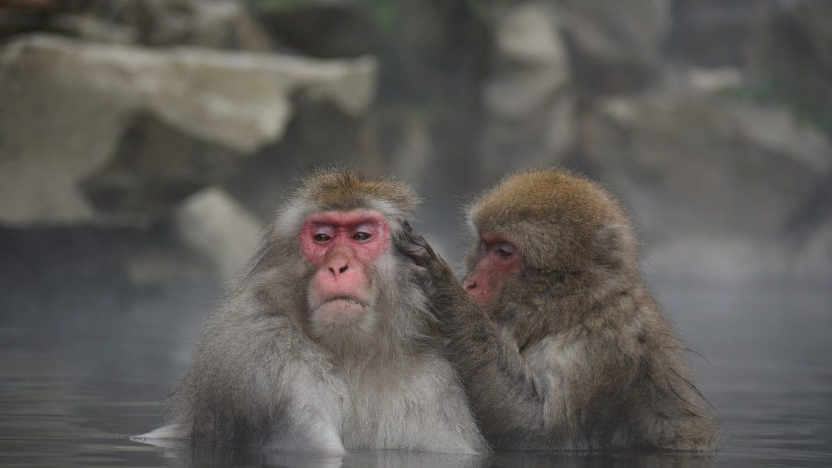 九州旅遊   黑川溫泉一日遊:交通、行程、必去景點、必吃美食整理