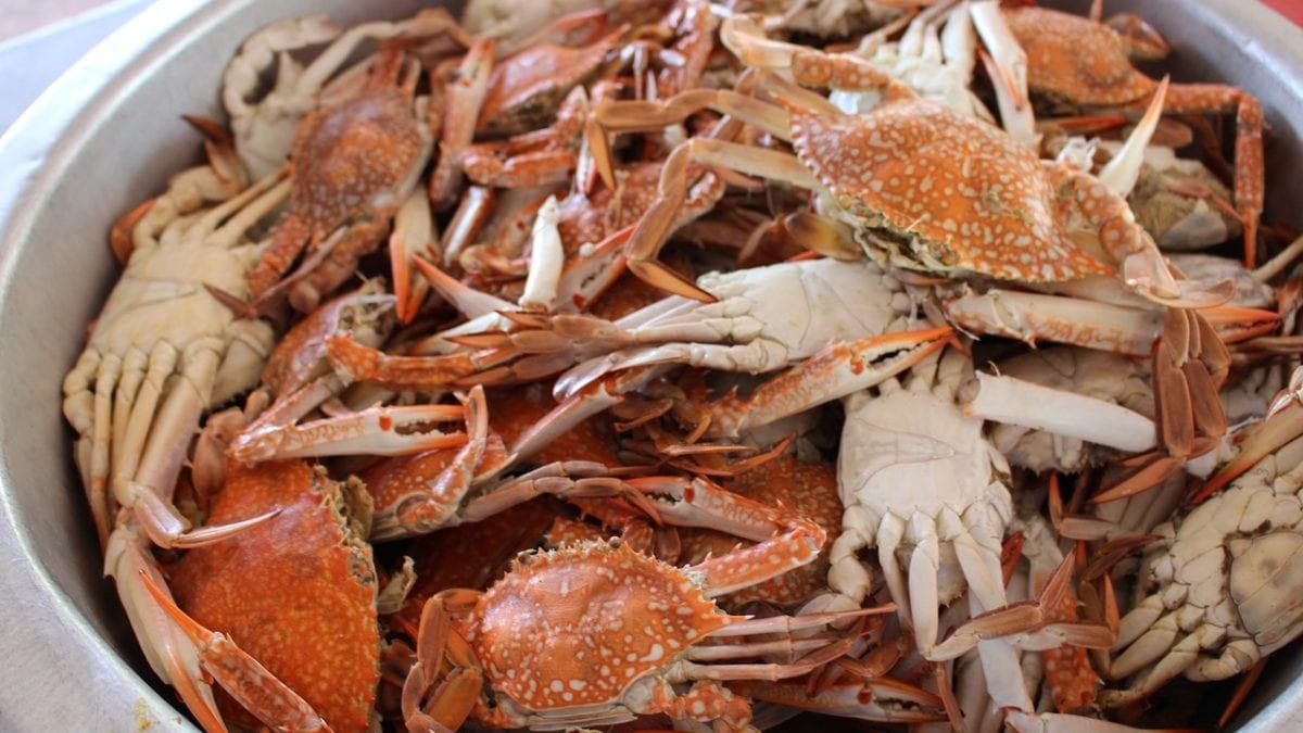 秋蟹正夯!台中螃蟹餐廳推薦top10,帝王蟹火鍋、螃蟹拉麵通通有