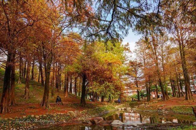 羅東運動森林公園 宜蘭走春景點