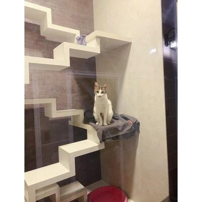 貓森旅 寵物住宿推薦