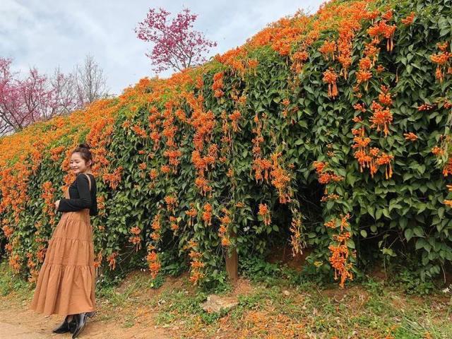 銅鑼環保公園 中台灣走春景點