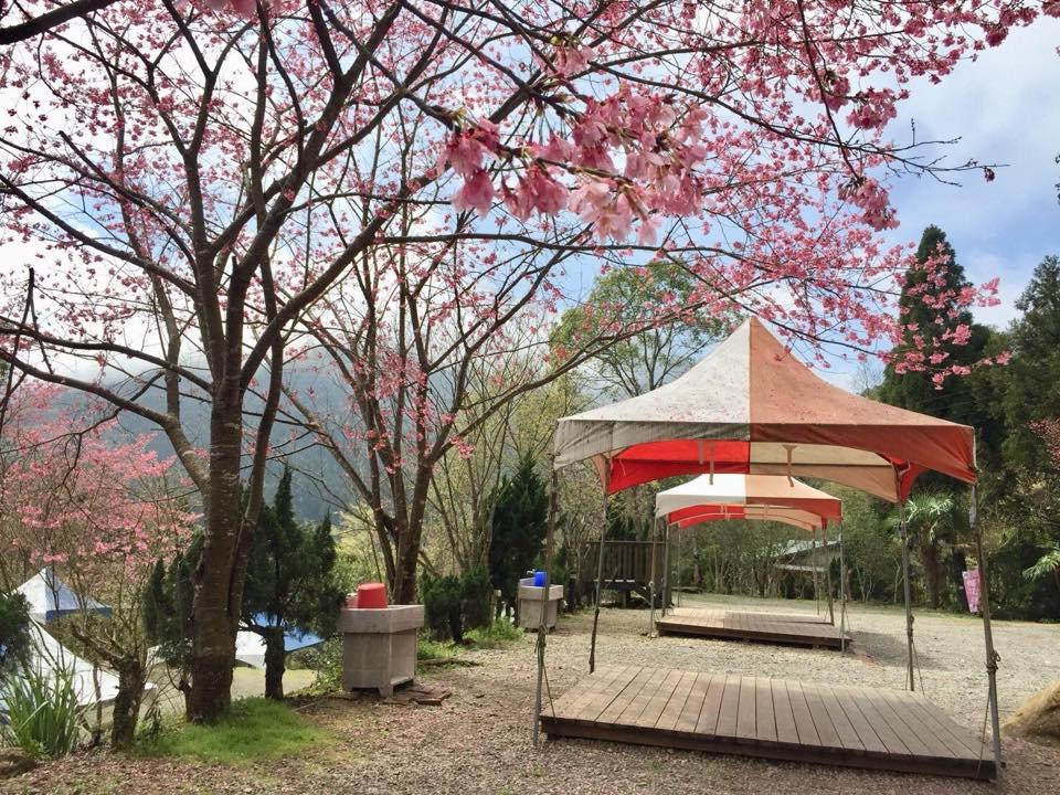 櫻之林露營區