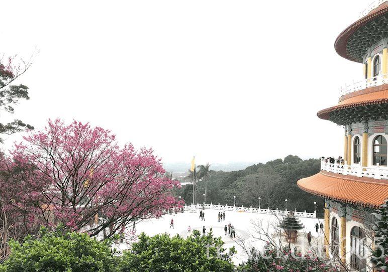 2021南投櫻花季怎麼玩?南投賞櫻景點、住宿推薦看過來!