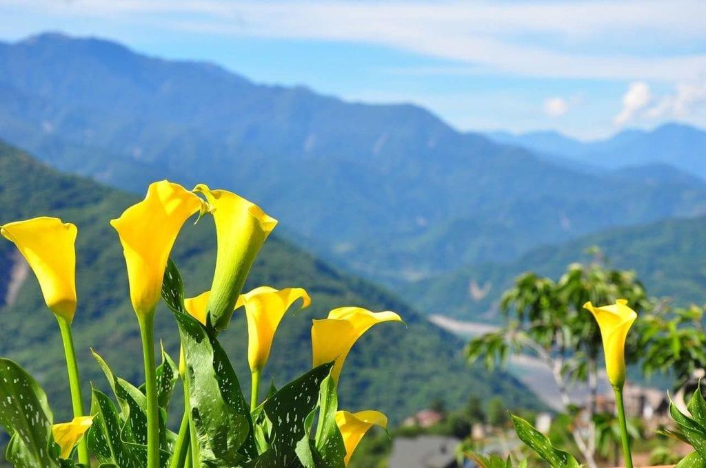 台灣中部走春