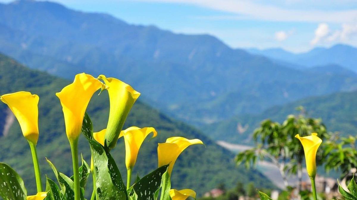 2020 春節旅遊|台灣中部走春景點推薦,看燈會、賞花散心隨你挑
