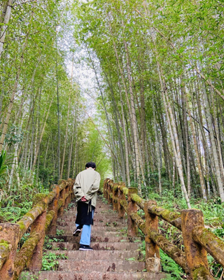 孟宗竹林步道