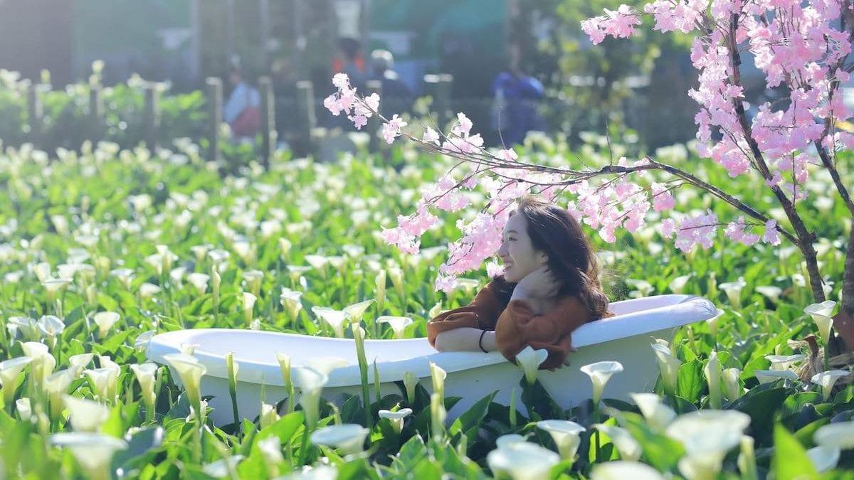 2021 陽明山海芋季開跑囉!竹子湖怎麼去 & 推薦餐廳景點懶人包