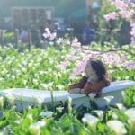 2020陽明山海芋季