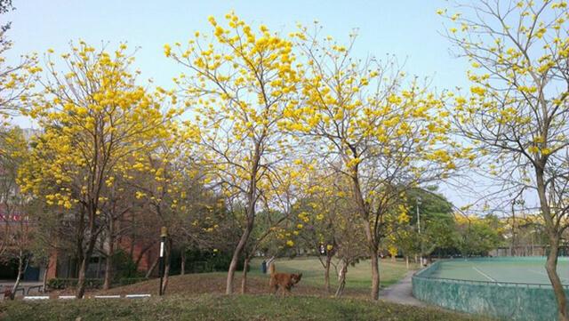 風鈴木景點鳳西運動公園