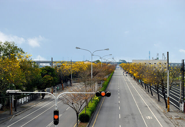 風鈴木景點溪洲金色公路