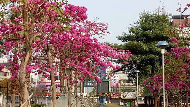 風鈴木景點嘉義市文化公園