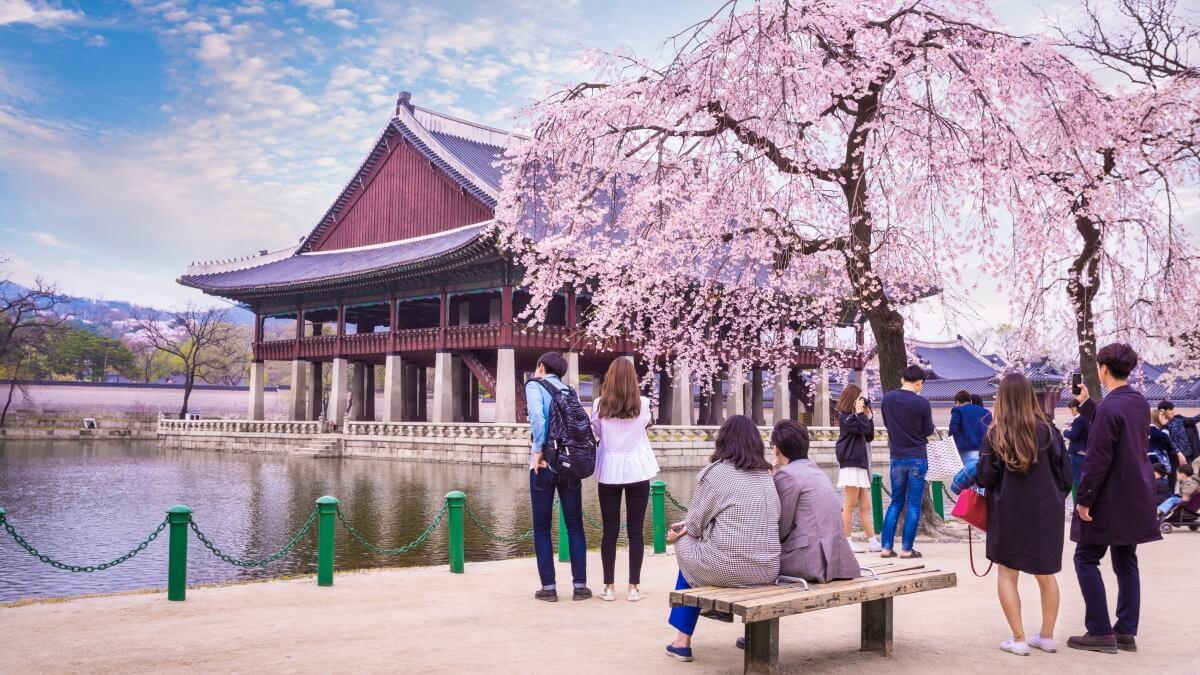 首爾旅遊 2020 首爾櫻花季住宿5選,汝矣島、石村湖步行5分可達