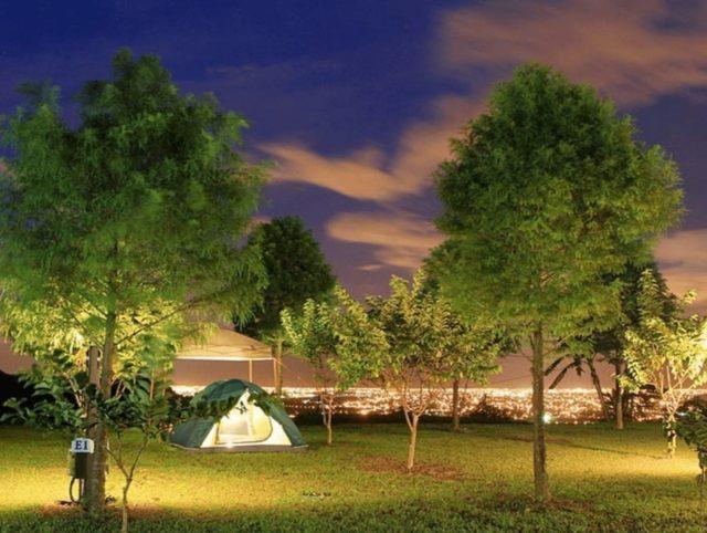 天際線茶園營地