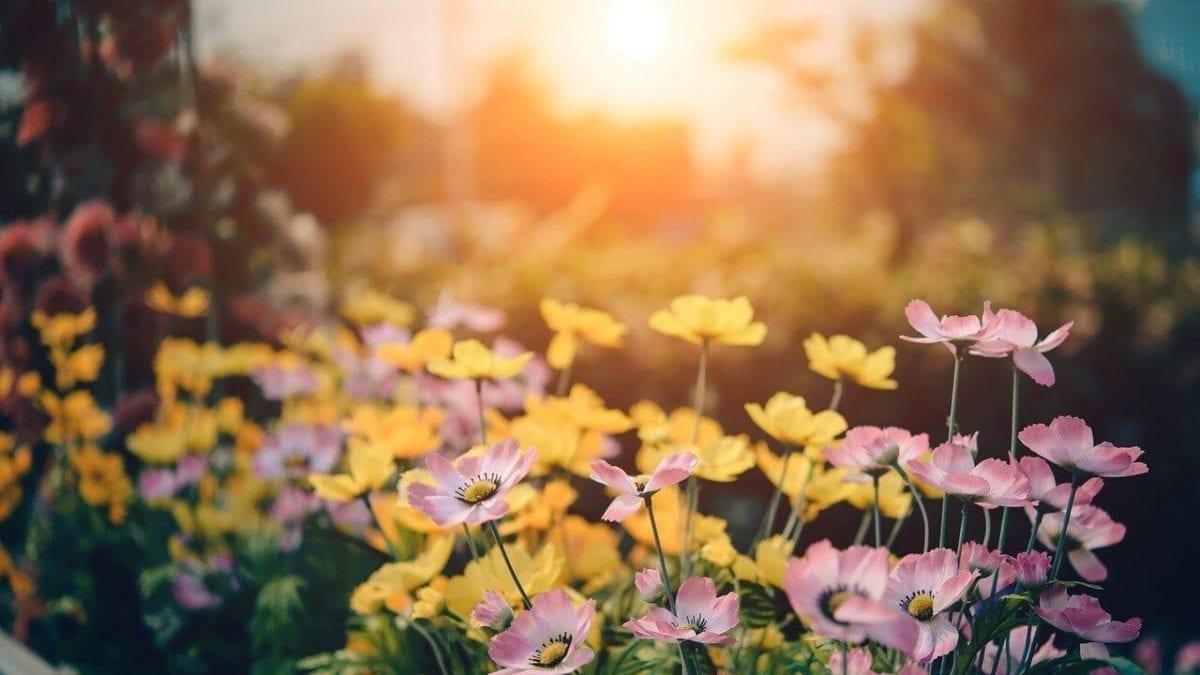 2020 台灣花季 | 5月全台賞花熱門景點、花季情報總整理