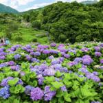 六月賞花景點