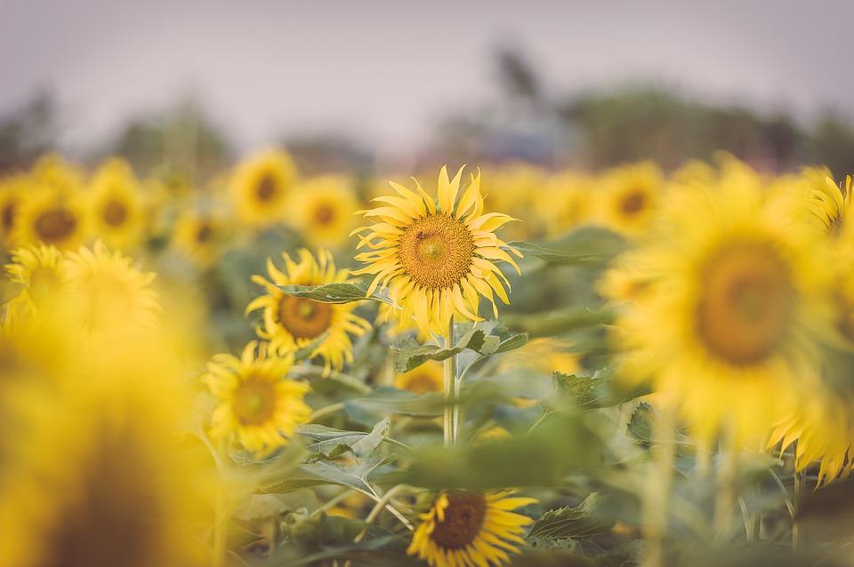 2020 台灣花季   7月全台賞花熱門景點、花季情報總整理