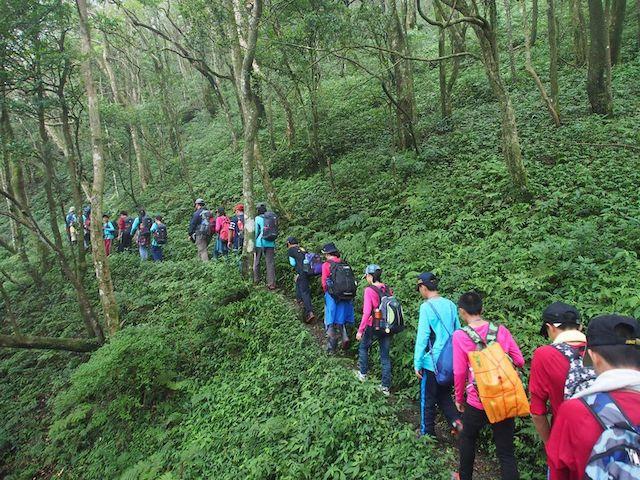 東眼山國家森林遊樂區東滿步道