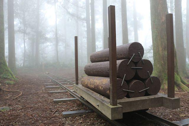 東眼山國家森林遊樂區森林步道