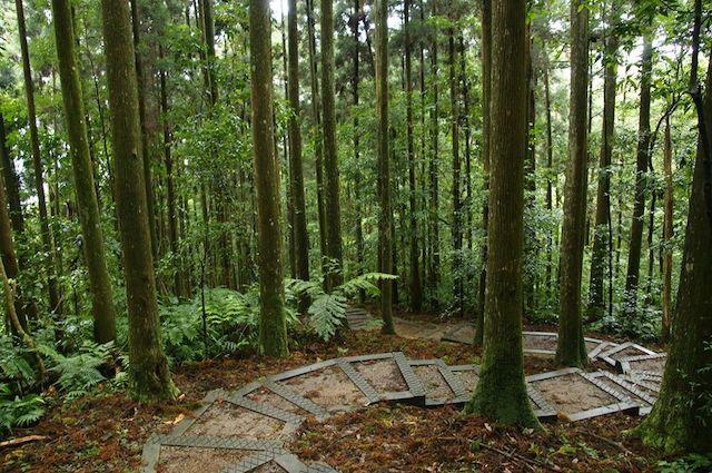 東眼山國家森林遊樂區步道