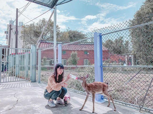 桃園景點山腳鹿場水鹿之家
