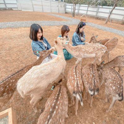 小琉球鹿粼梅花鹿園區