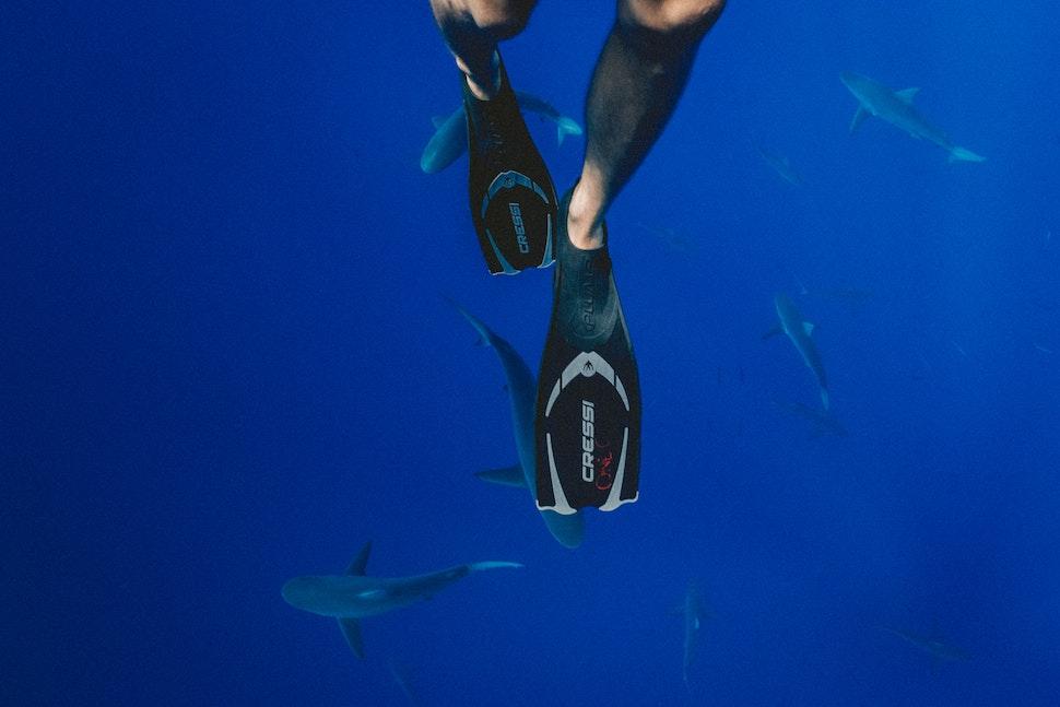 浮潛、自由潛水必備!2020 蛙鞋推薦top10,成為潛水達人不是夢
