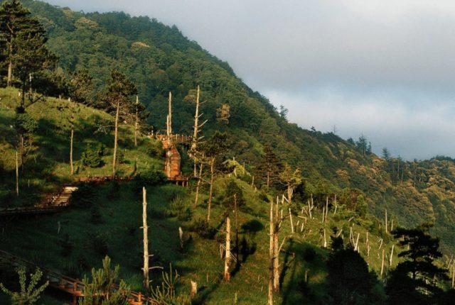 觀霧國家森林