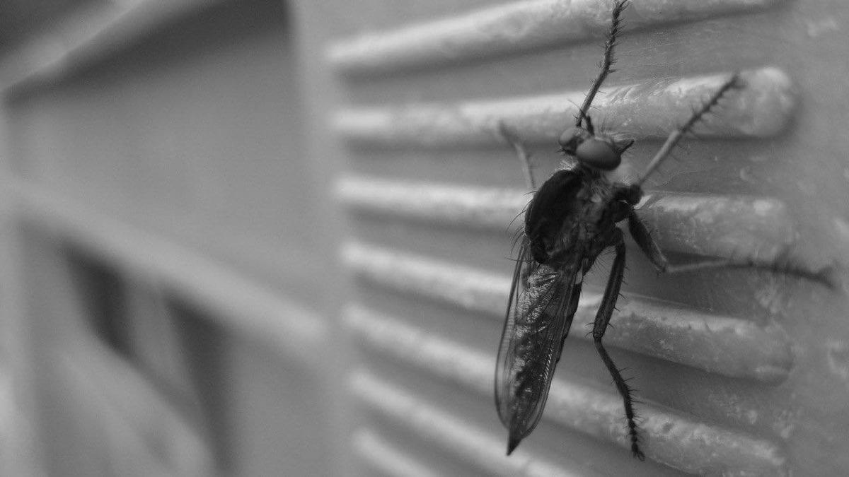 夏天居家必備!2020 驅蟲器推薦top10,跟惱人蚊蟲說掰掰
