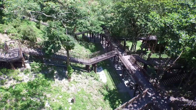 知本森林園區吊橋