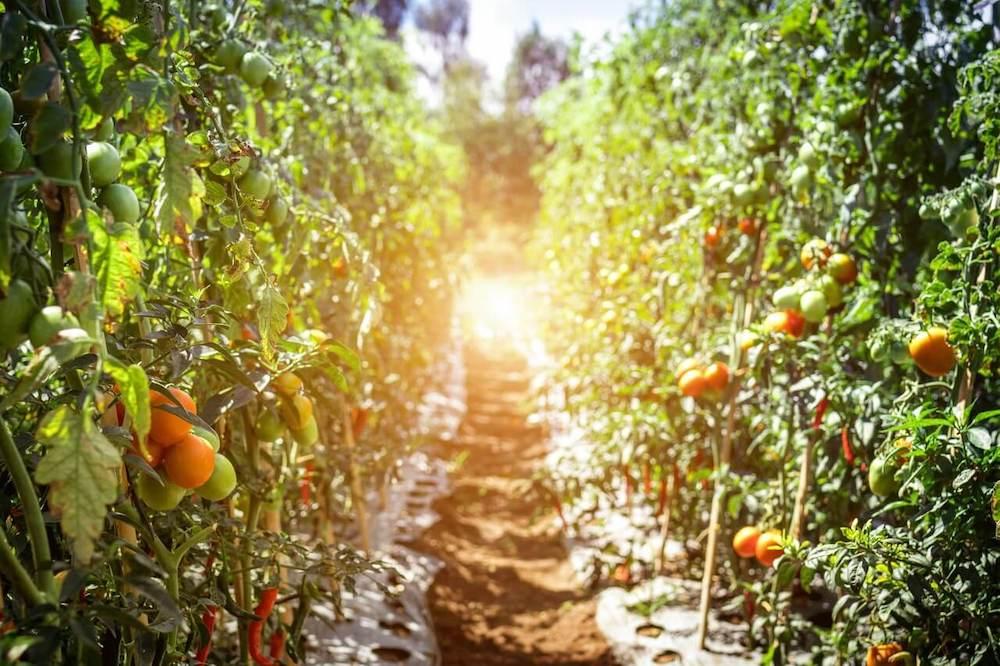 振興三倍再加碼 | 2020 農遊券領取、使用方法、合作業者總整理