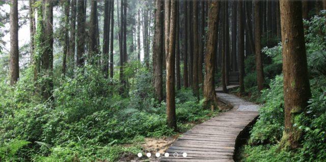 杉林溪森林生態度假園區