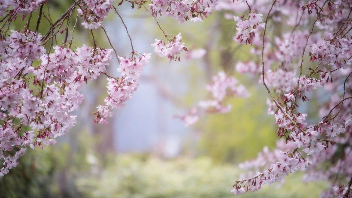 2021 台灣花季 | 2月全台賞花熱門景點、花季情報總整理
