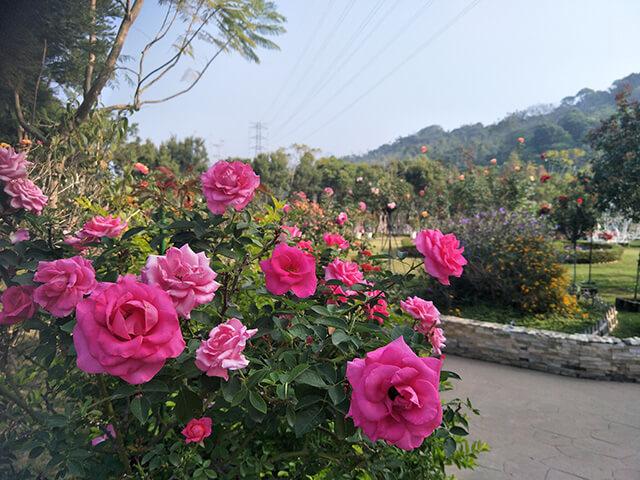 蘿莎玫瑰山莊玫瑰園